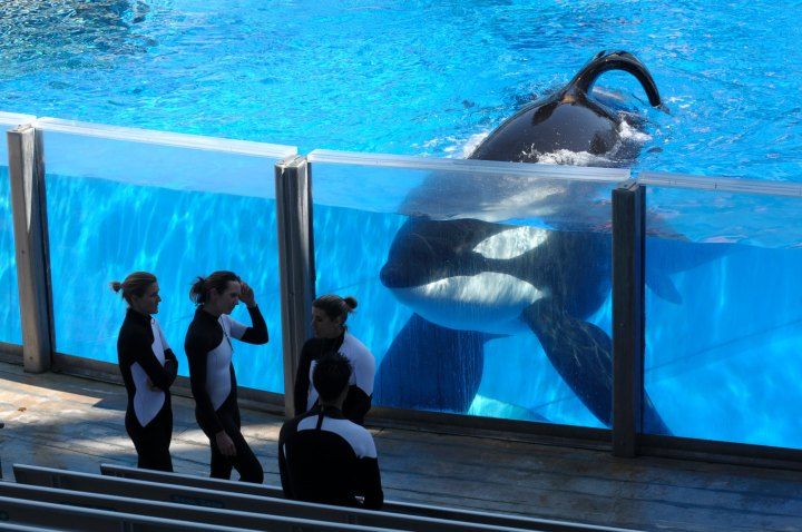 TripAdvisor Stops Selling Tickets to Cruel Animal Attractions, but Continues to Endorse SeaWorld